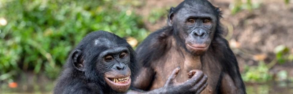 Primatology Course Level 3 - Endorsed UK Open College