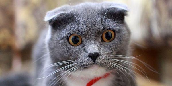 День кота 2018: цікаві факти про котів