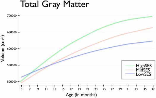 Зі збільшенням віку дитини об'єм сірої речовини головного мозку корелює з соціально-економічним статусом родини (SES): що вище статус, то більший об'єм (згідно з дослідженням Хансон та інших [11]).