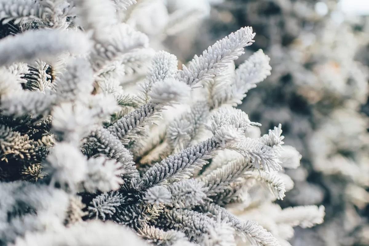 Зима 2020 по прогнозу будет самой холодной в Европе за ...