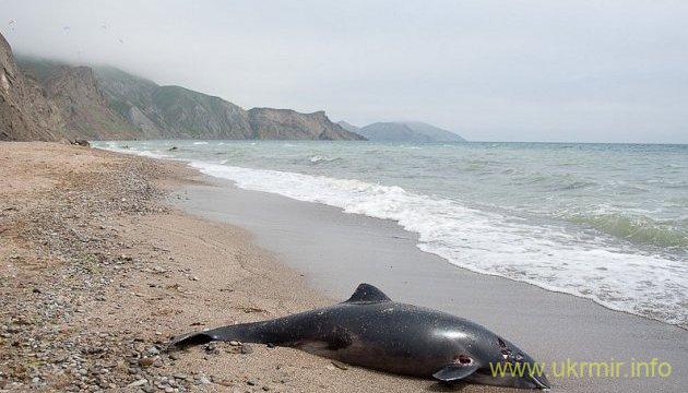 У берегов Крыма произошла массовая гибель дельфинов
