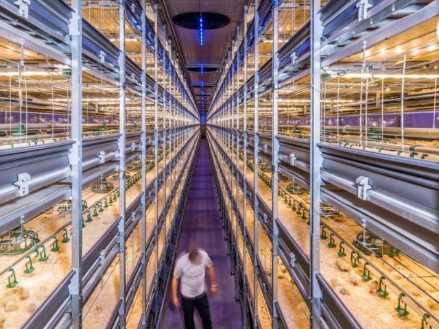 Как Нидерланды кормят полмира