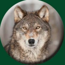wolf-wheelcover