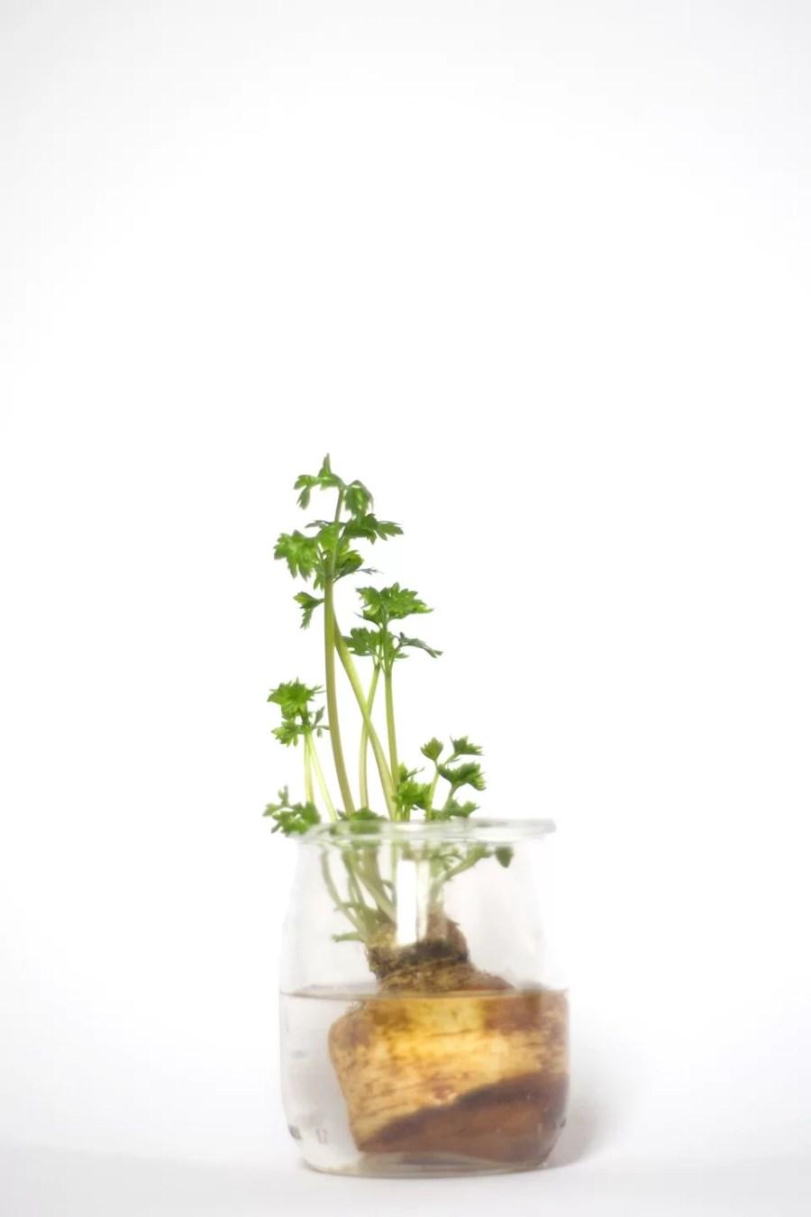 hodowanie warzyw z resztek