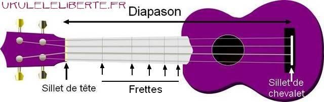 les tailles de ukulele