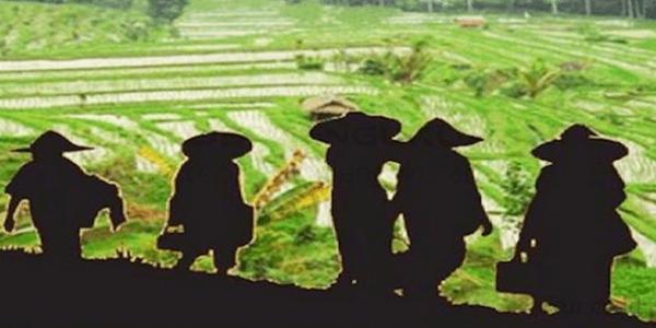 Pertanian Organik Solusi Pertanian Modern1