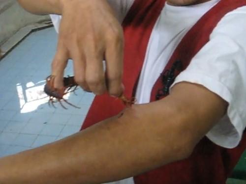 Сколопендра опасна для человека? Помощь при укусе сколопендры