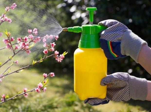 Опрыскивание груши