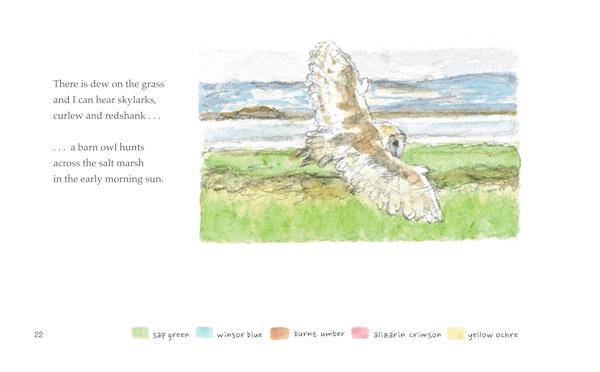 June salt marsh and a barn owl is hunting