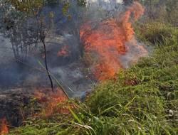Puluhan Hektar Hutan di Sembulang Terbakar