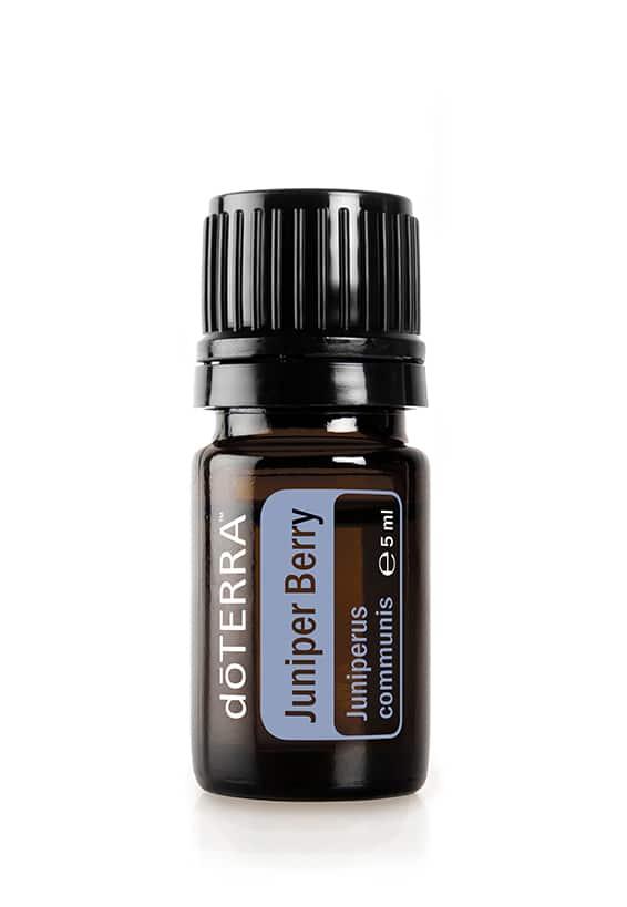 Lenupăr – Juniperus communis – Juniper Berry