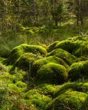 Mossbullar (Soldatmossen)