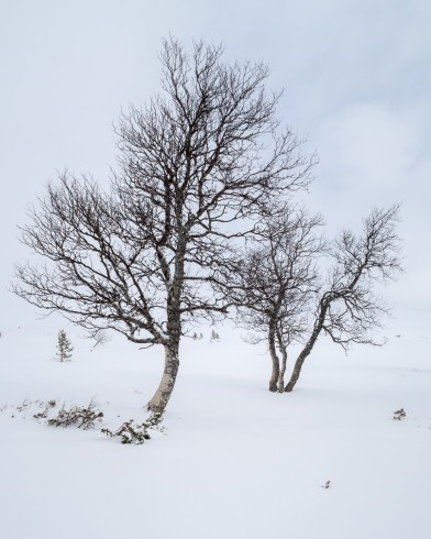 2017-04-14 Grövelsjön (Dalarna)