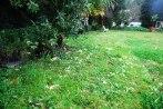 primulas-vulgaris-uliako-mintegien-parkea3