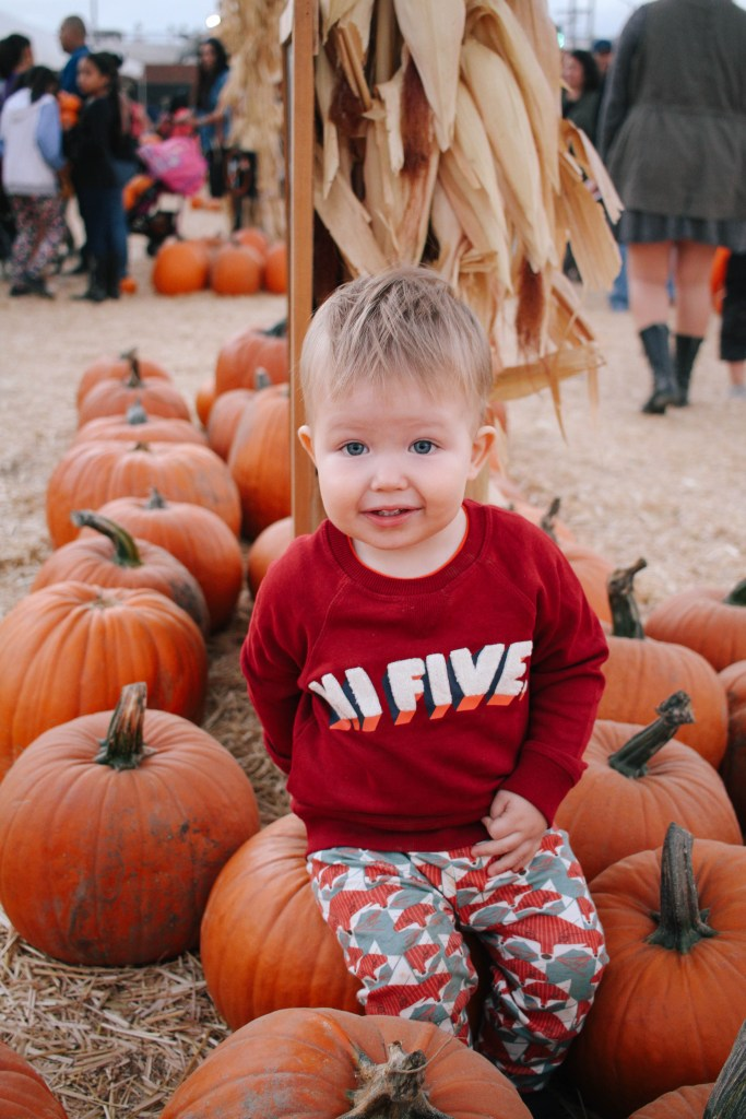 pumpkin-patch-8475