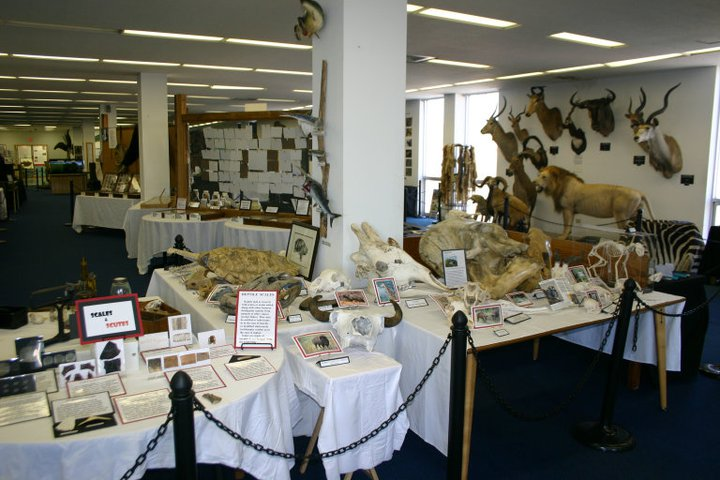 The+specimens+on+view+at+the+ULM+Museum+of+Natural+History+are+separate+from+the+research+collections+that+may+be+destroyed.