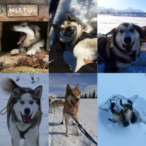 Meet the Sled Dogs