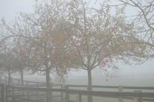 äpfel im nebel
