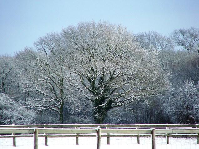 snow-1583676_1280.jpg