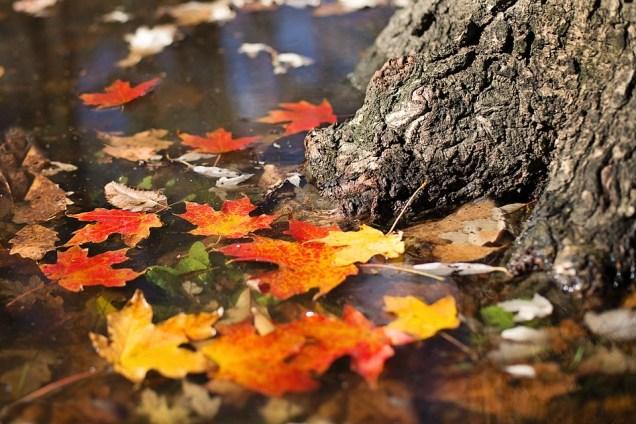 autumn-2900166_960_720.jpg