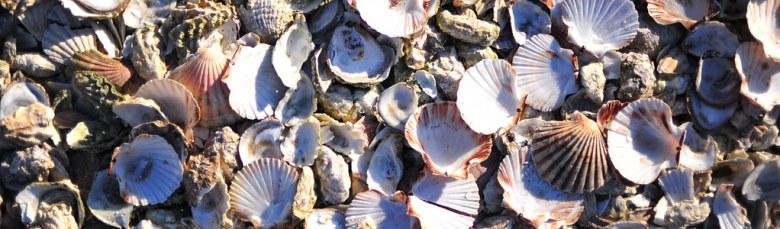 Sally sells seashells by the seashore.