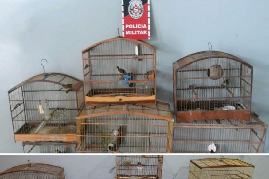 Polícia Militar prende dois suspeitos e apreende 16 aves silvestres em Santa Rita