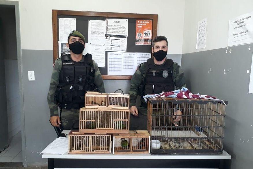 Polícia apreende aves silvestres em feira de Campina Grande e aplica R$ 13, mil em multas