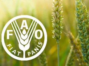 FAO: Food prices reach highest levels in almost 7 years