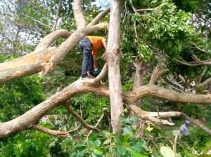Despejan vialidad hacía pueblos de Caruao tras caída de árboles
