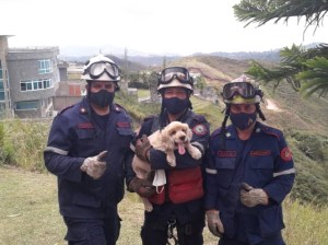 They rescue a puppy that had fallen into a ravine in Los Salias