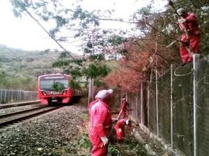 Este fin de semana harán labores de pica y poda en ferrocarril tuyero