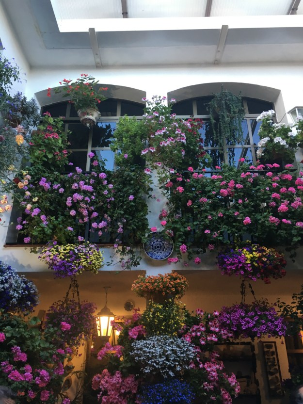 The Festival of the Patios in Cordoba, Spain. Click for our travel guide to two days in Cordoba, and our full 10-day trip to Spain!