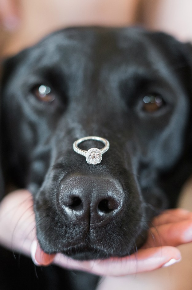 Engagement ring balanced on a dog's nose. Such a cute engagement picture idea! A Gold and Blush Bridal Shower | Ultimate Bridesmaid | Anne Molnar Photography