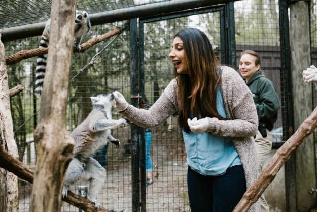 For this unique zoo bachelorette party, the bride and her friends got to feed and train animals like these ring-tailed lemurs! A Zoo Bachelorette Party | Ultimate Bridesmaid | CTG Photography