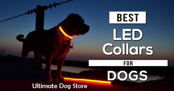 Best Led rechargeable dog collar Review