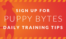 Sign up for puppy bytes daily training tips