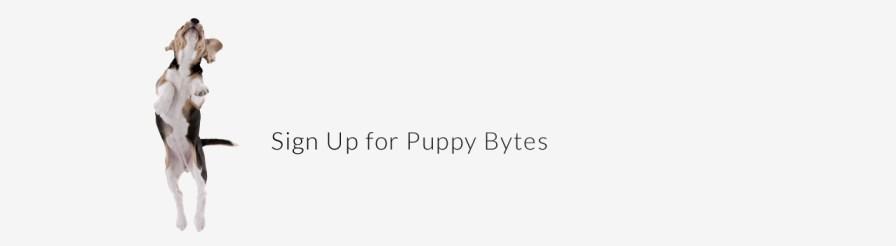 puppy_bytes
