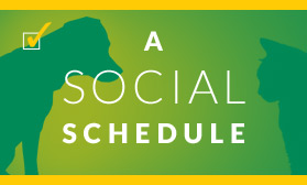 A Social Schedule