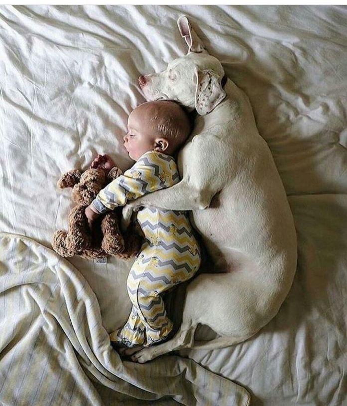Amicizia tra cane e bambino