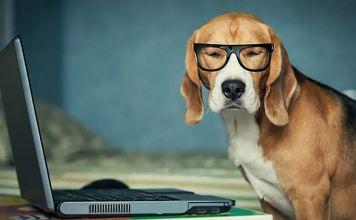 antistress cane ufficio