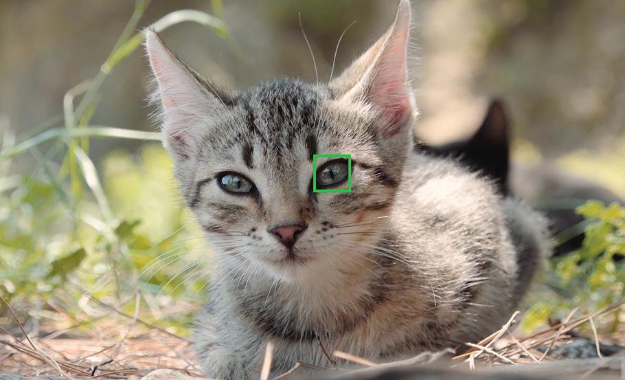 Zuhause oder in freier Wildbahn: Sony Autofokus fängt Tiere ein!