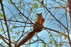 squirrel_tree_animal_spring_96542