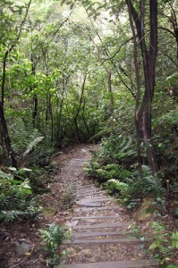 Nellie's Glen has over 400 steps down into the valley and around 450m of elevation over 1.5kms. A great workout.