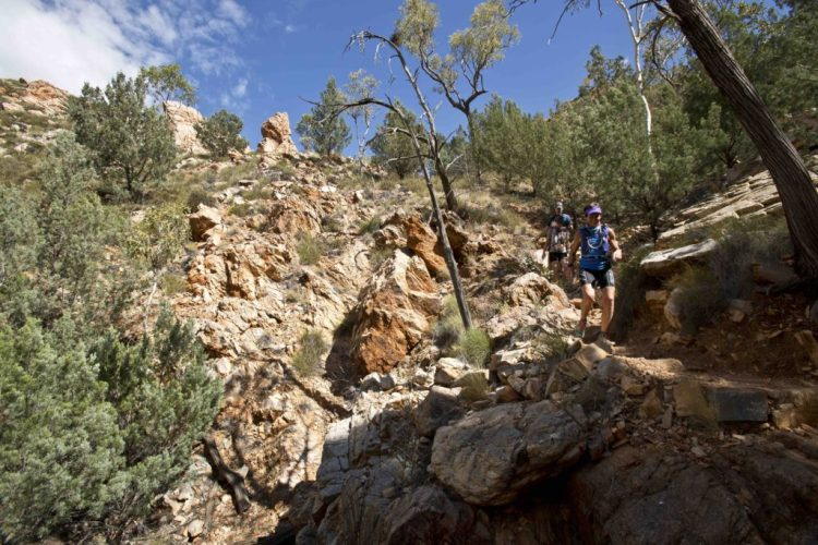 Running from Simpsons Gap to Standley Chasm on the Larapinta course