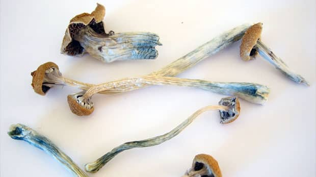 Psilocybin Magic Mushrooms