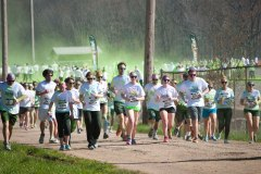 Color Vibe 545
