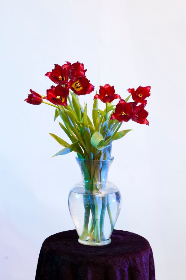 Exotic Tulips in a Vase