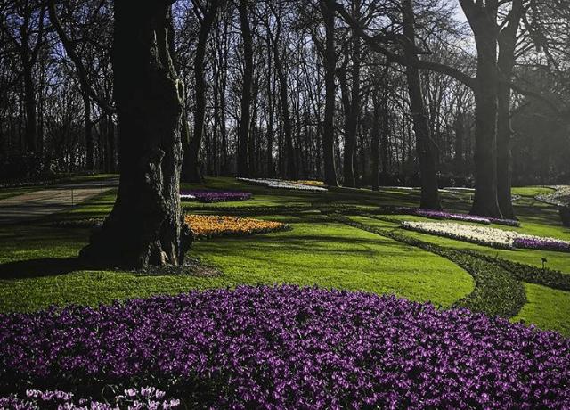 Keukenhof, o parque das tulipas em Lisse, na Holanda