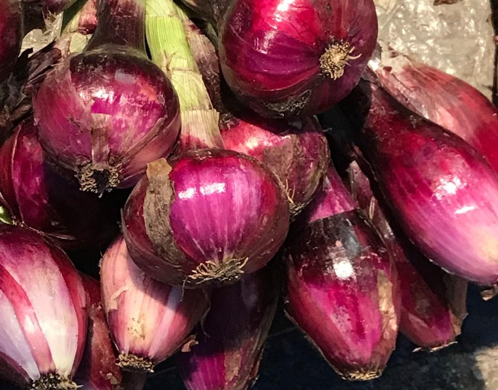A famosa cebola rosa de Tropea