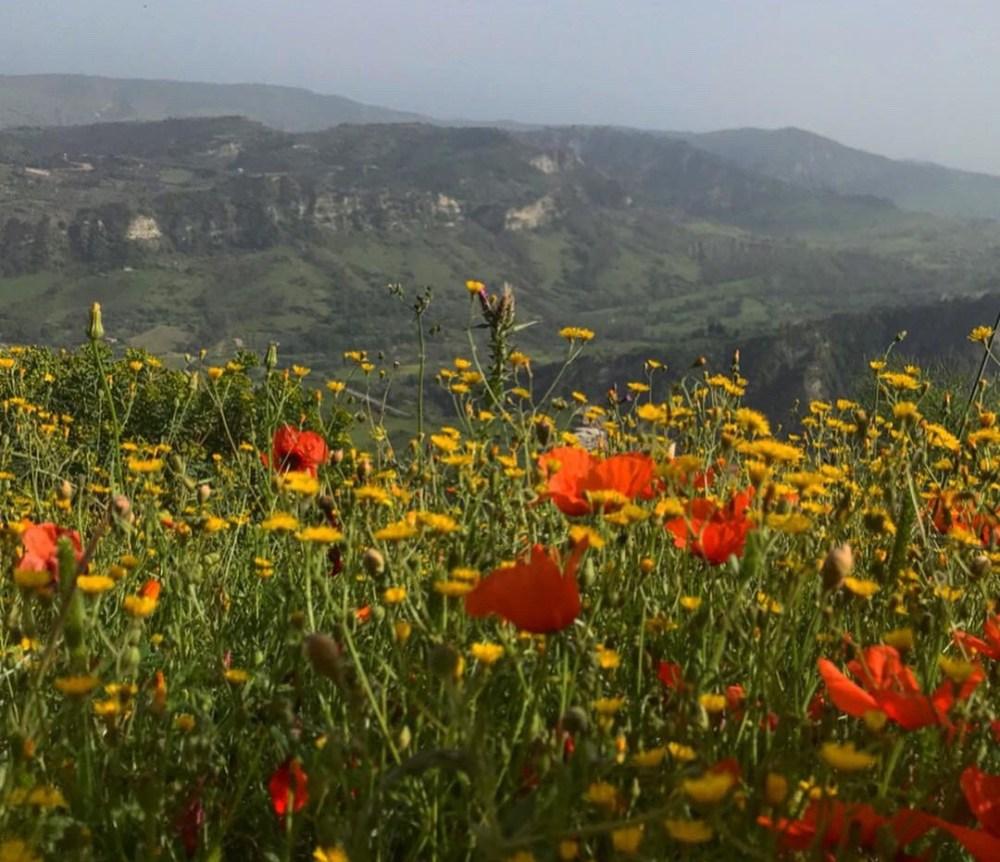 Um pouco mais da natureza e arredores de Stilo, na Calábria